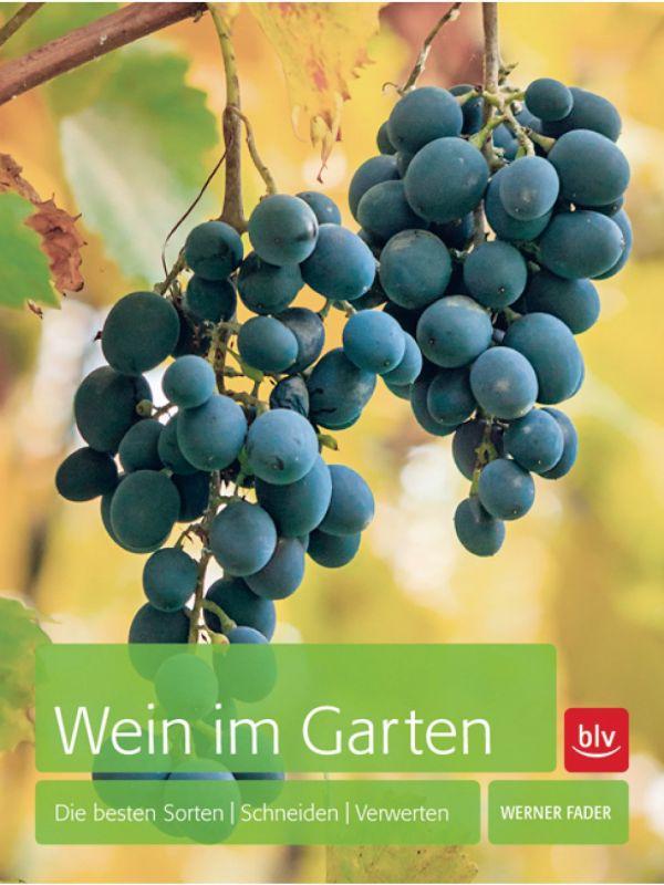 Wein im eigenen Garten